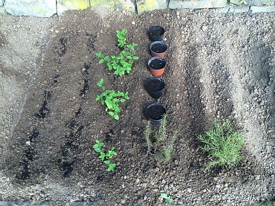 Da hatten wir noch die Hoffnung, dass aus den Saaten schmackhafte und natürliche Pflanzen erwachsen würden...